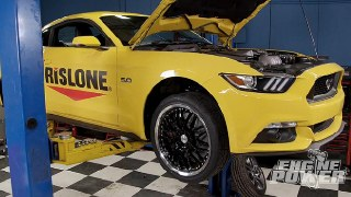 Yellow Fever Black Magic (Rislone Mustang)