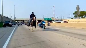 Chicago Man Facing Charges After Riding His Horse Down The Dan Ryan Expressway