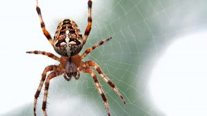The Itsy Bitsy Spider Descends Mid-Drive and Causes Car Accident